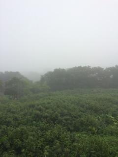 Tシャツ屋コスミック「霧」
