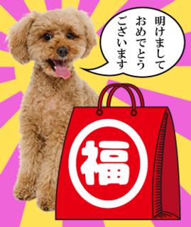 愛犬用福袋�@