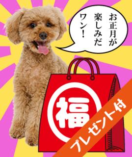 2019福袋~愛犬
